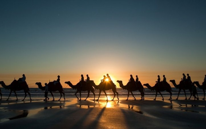 78680__camel-caravan-at-sunset_p